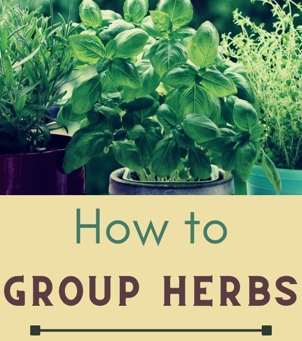 What Herbs Grow Well Together?