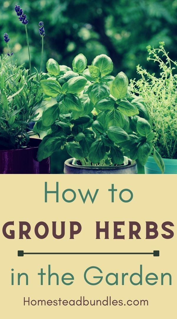 Want to know what herbs grow well together? Here are some of our favorite herb combinations for the garden! #homesteading #gardening #herbs